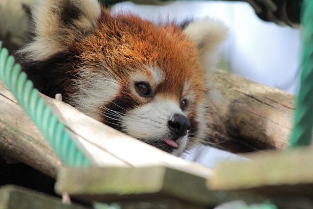 かわいい動物がたくさん♪大人気「旭山動物園」入園券付のお得なプラン販売開始☆