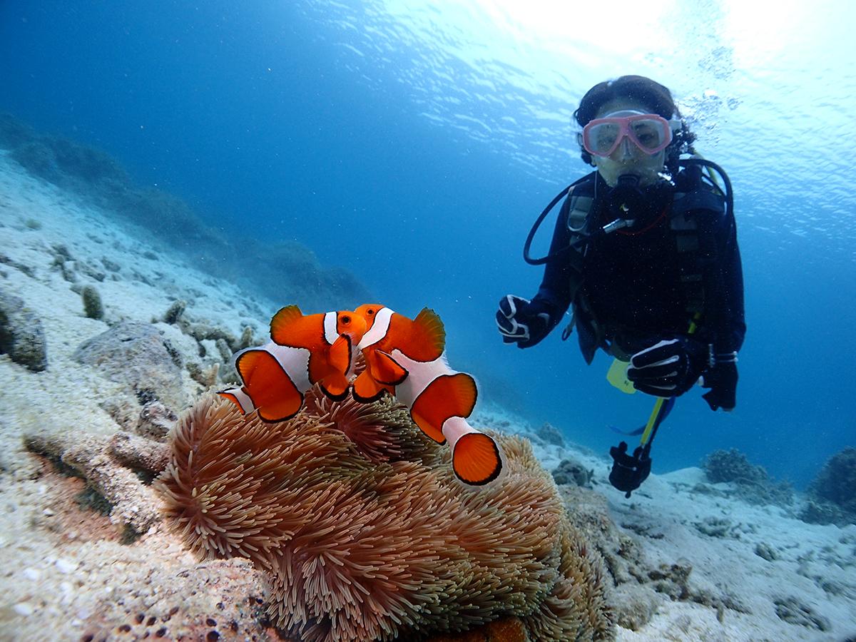 《美しい海での体験ダイビング付き》飛行機+ホテルに体験ダイビングがついたお得なセットプラン